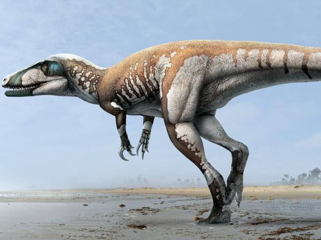 Abruzzo, scoperta l'impronta del più grande dinosauro bipede italiano|Il video