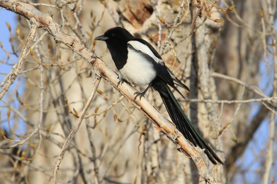 Studiare gli uccelli per scoprire l'uomo