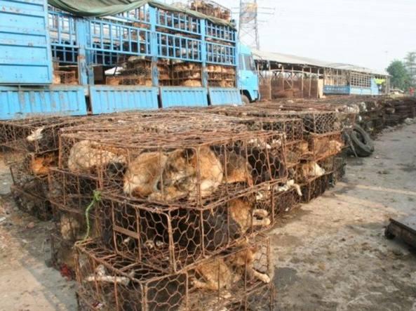Cani pronti per essere macellati in Cina, foto di archivio