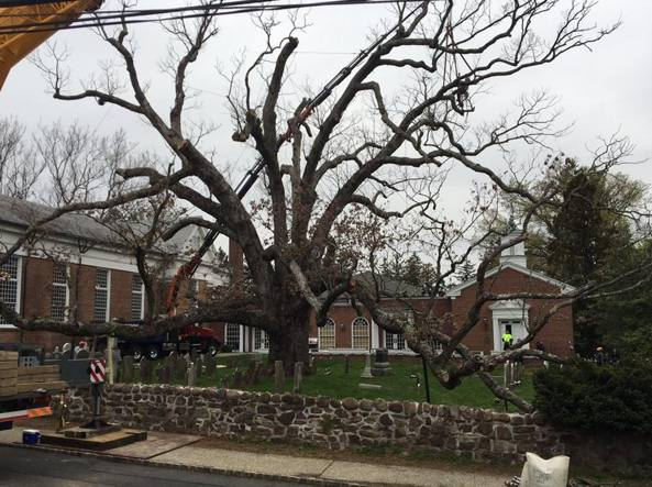 I lavori di rimozione dell'albero