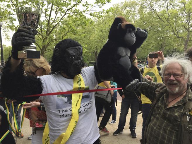 Londra: Tom Harrison, vestito da gorilla, taglia il traguardo della maratona (in sei giorni)