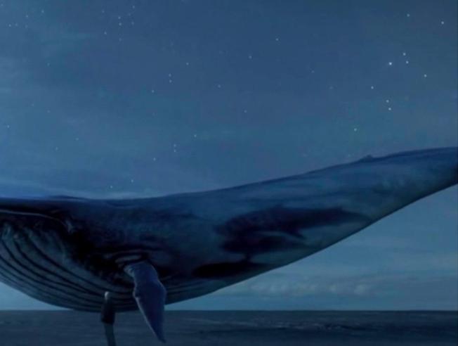 Fenomeno Blue Whale:  il «gioco del suicidio» che probabilmente non esiste