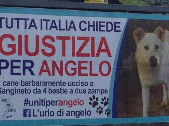 Cane torturato e ucciso: massimo
