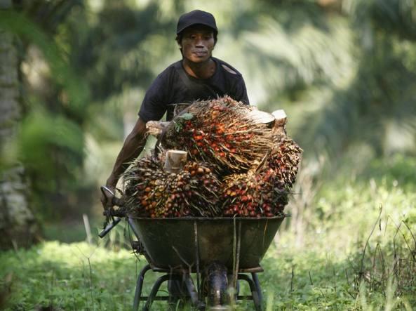 Olio di palma sostenibile: Italia aderisce a Dichiarazione di Amsterdam