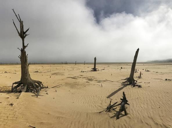 Effetti della siccità in Sudafrica (Ap)