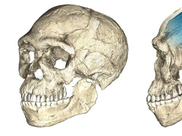 L'Homo sapiens è più vecchio di 100mila anni