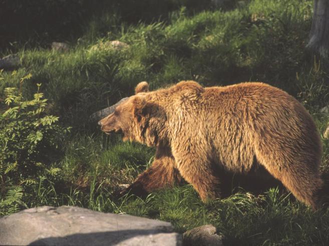 Spray anti orso in vendita a Trento«Ma attenzione, è inefficace»