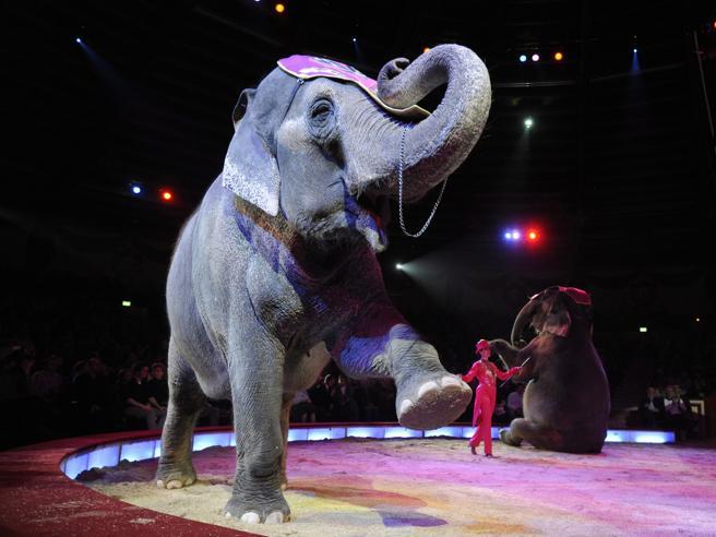 Verso lo stop agli animali nei circhi: l'emendamento che voleva   solo ridurli è caduto