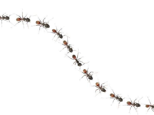 Invasione di formiche in casa cosa fare senza perdere la for Esche per formiche