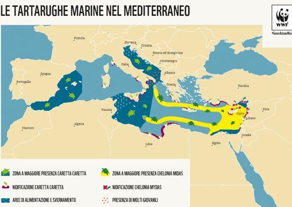 Le tartarughe marine nel Mediterraneo (da Wwf)