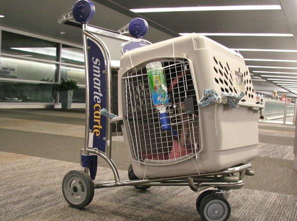 In viaggio con i nostri animali domestici for Quali compagnie aeree portano animali domestici in cabina