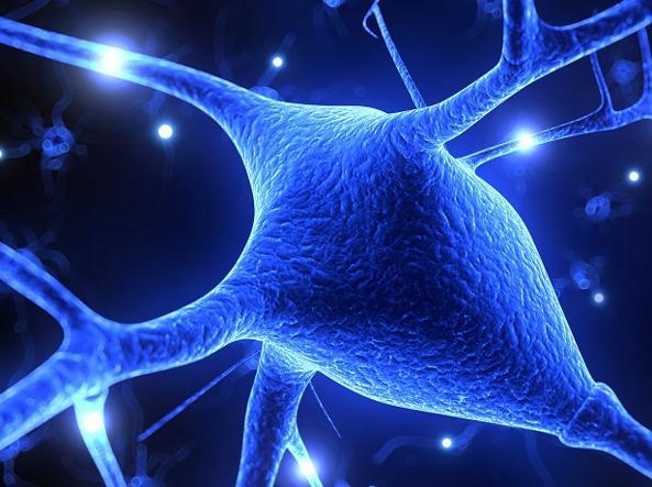 Sclerosi multipla: isolato il batterio che causa la malattia, è nell'intestino