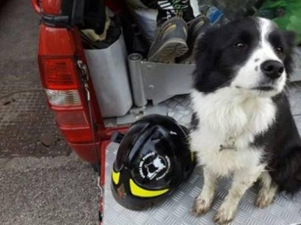 Amatrice dedica una statua a Camilla, il cane-eroe del terremoto