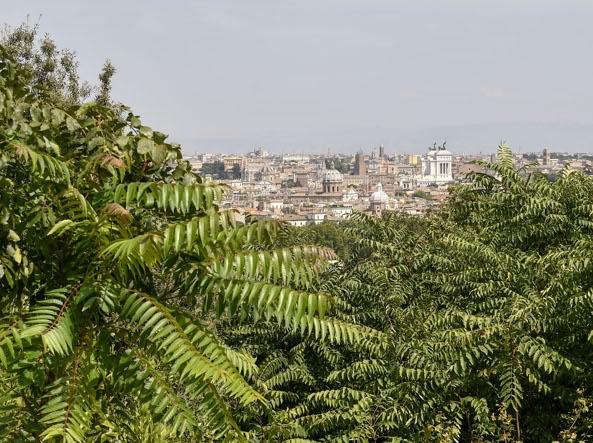 Il panorama di Roma dal Gianicolo «nascosto» dalla vegetazione incolta (LaPresse)