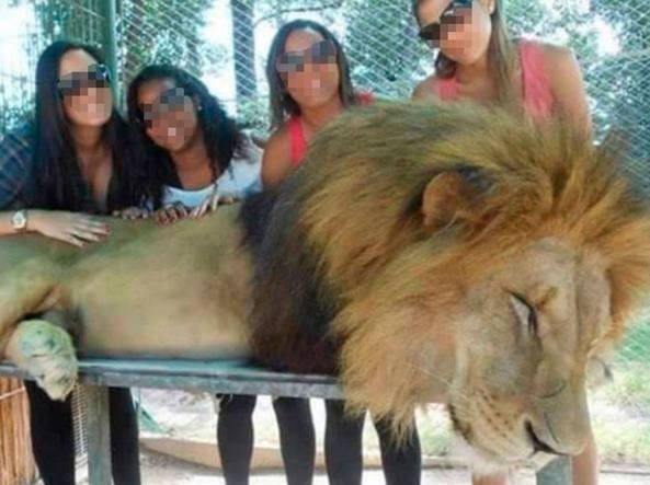 Animali drogati allo zoo per un selfie con i visitatori - Immagini di animali dello zoo per bambini ...