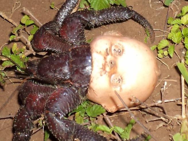 Il lato «oscuro» della natura: quando gli animali sono spaventosi