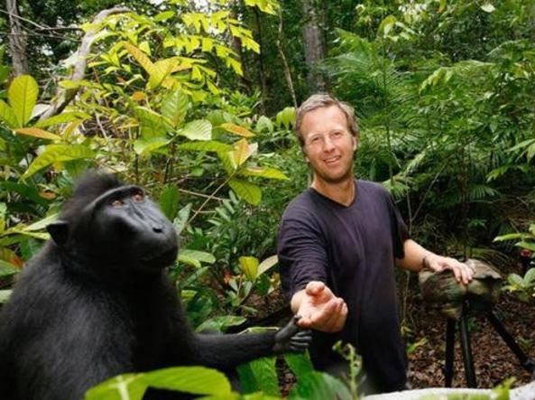 Selfie del macaco, trovato l'accordo sul copyright: è del fotografo