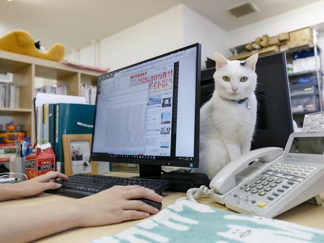 In ufficio con i nostri animali«Rinuncerei ai buoni pasto»Sondaggio  in Ue