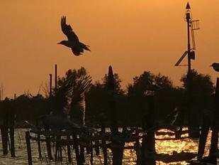 Un tramonto sul Delta del Po in un'immagine di Elisabetta Sgarbi