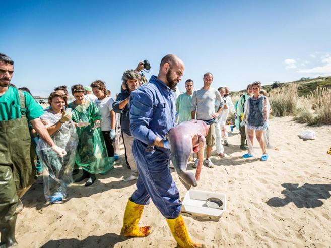 L'italiano che accarezza le balene: «Sulla pelle sento il loro cuore»