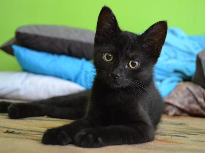 Gatti: occhio a questi 10 comportamenti Sono alcuni possibilisegnali di tumore
