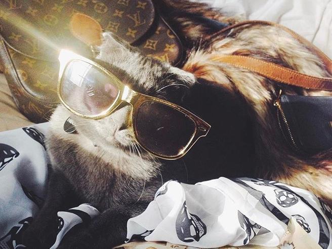 I Rich Cats conquistano Instagram: soldi, champagne e oggetti griffati