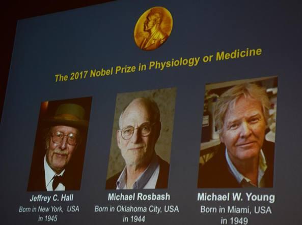 Nobel: per la Medicina a Hall, Rosbash e Young per ritmo circadiano