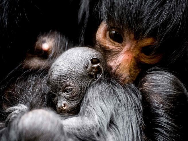 La foto del giorno: le più belle immagini di animali dall'Italia e dal mondo