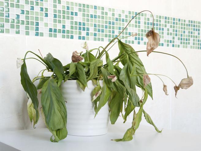 Pollice (poco) verde: 4 motivi per cui le piante di casa non durano a lungo