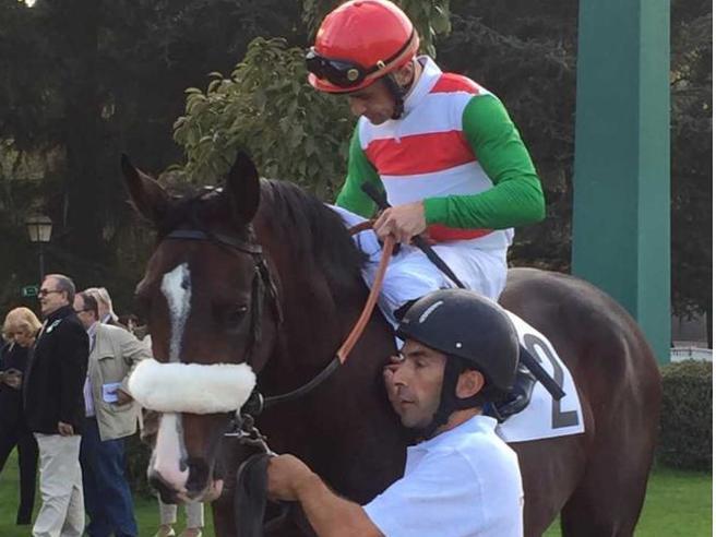 training quarter horse kosten