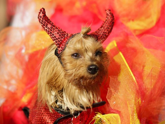 Dolcetto o cagnetto? A New York la Halloween Dog Parade
