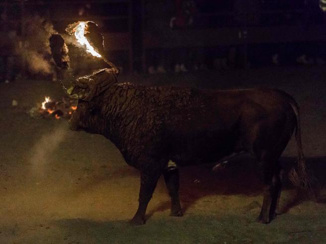 I tori dati alle fiamme al festival «Toro Jubilo»  di Medinaceli Foto