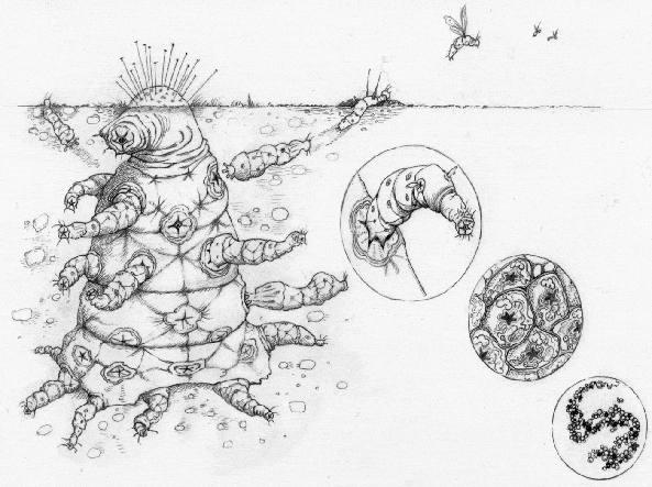 The Octomite», l'alieno immaginato dai ricercatori di Oxford applicando la teoria dell'evoluzione darwiniana. L'illustrazione è opera di Helen Cooper