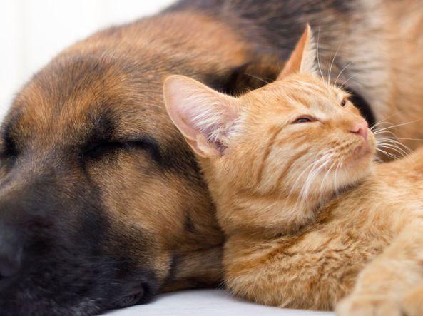 7 regole da imparare dai gatti