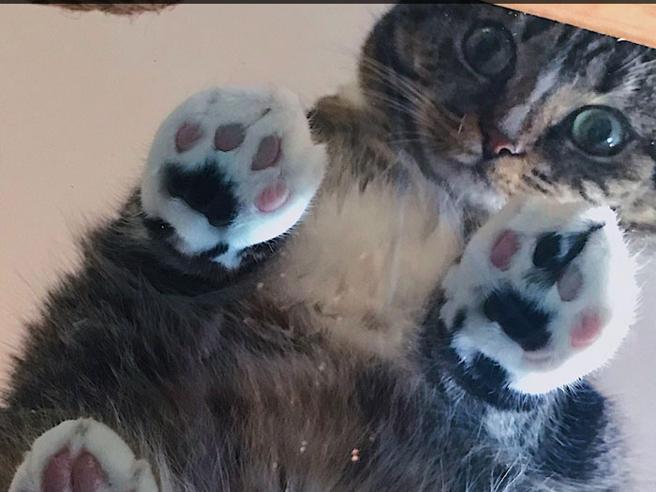 Non trovate gattini su Internet? Ve li diamo noi