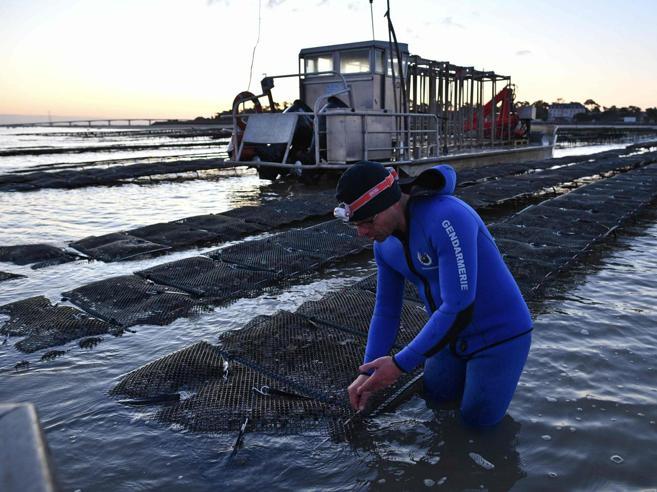 Droni e visori notturni:   caccia ai ladri di ostriche nell'Atlantico