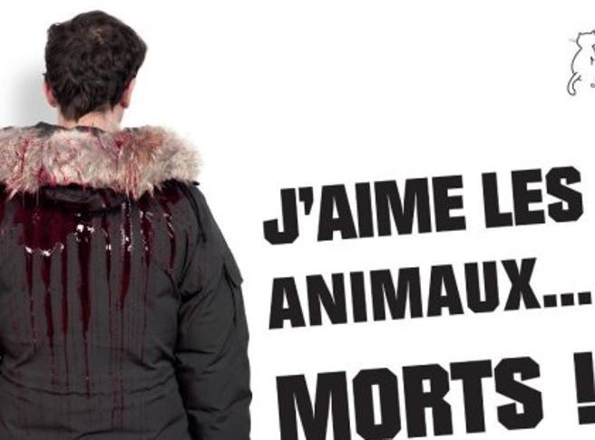 «Amo gli animali..morti»:  la nuova campagna di Brigitte Bardot contro le pellicce