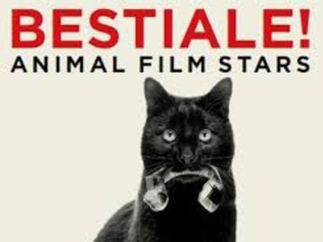 Quando le vere star del grande schermo sono gli animali: cani, gatti, scimmie, gufi