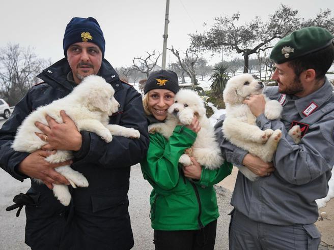 Stanno bene i cani di Rigopiano: uno vive col papà di una vittima Foto