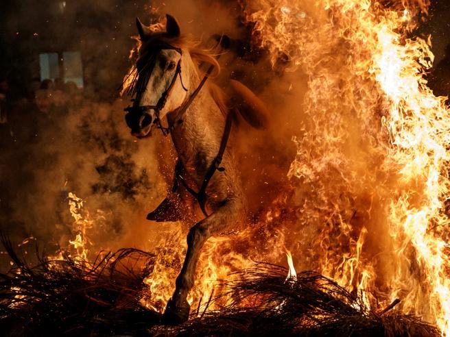 Le Luminarie di Sant'Antonio  e il salto dei cavalli nel fuoco Foto
