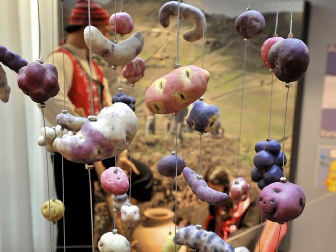 Musei bizzarri e insolitiUn po' bazar un po' gallerie