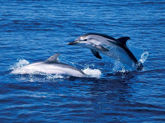 Il mistero dei delfini morti (forse) per il virus simile al morbillo