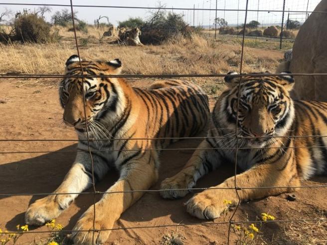 Africa, la truffa dei falsi santuari per difendere gli animali Foto