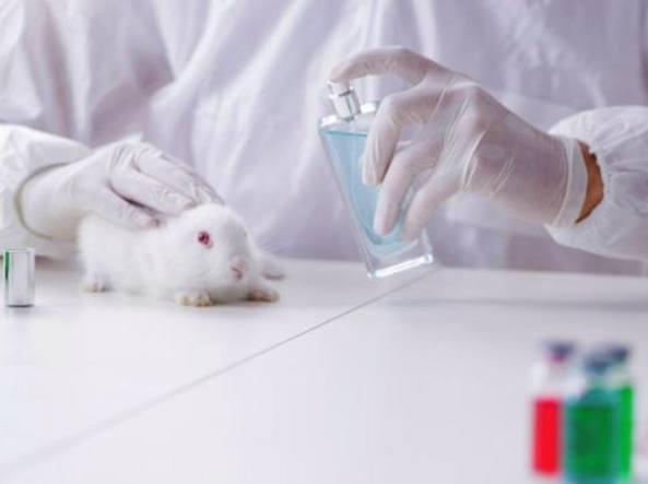 Test cosmetici vietati sugli animali L'Europa punta a un divieto mondiale