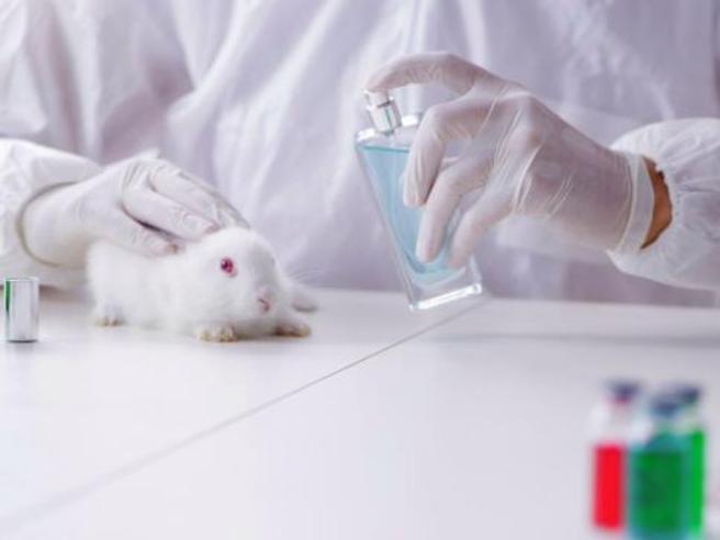 No ai test cosmetici  sugli animaliL'Europa sfida il resto del mondo