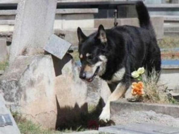 Addio Capitain, il cane che ha dormito sulla tomba del suo padrone per undici anni