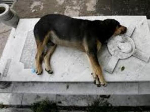 Addio a Capitán, il cane che ha vegliato la tomba del suo papà umano per 11 anni