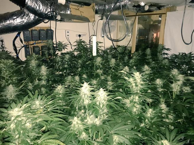Non c'è neve sul tetto: polizia scopre piantagione di cannabis