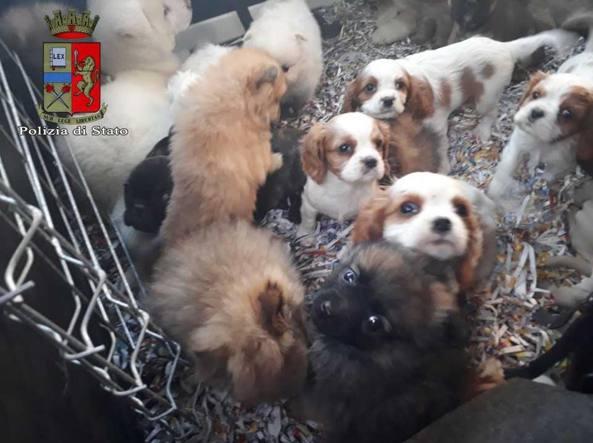 Cuccioli In Regalo Olbia Sconti Motodays Roma