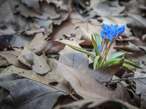 Primavera 2018: quest'anno arriva il 20 marzo. Ecco perchè